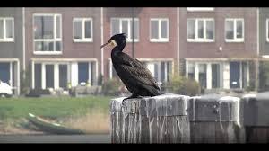 Geheid Stadsvogels